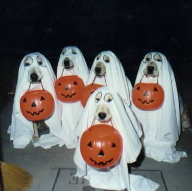 ghostdogs.jpg